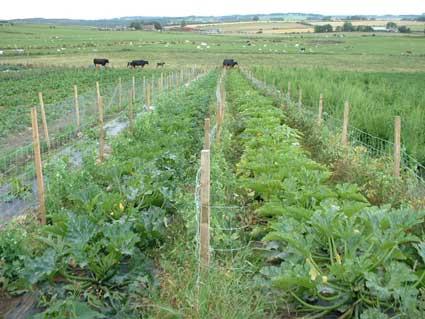 coltivazione organica lombardia